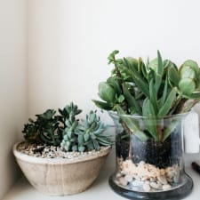 The Secret Life of Your Plants: Refresh It with Crystals!